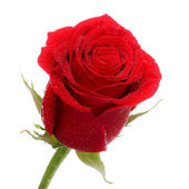 depositphotos_6426330-stock-photo-red-rose-bud